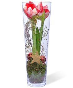 Amaryllis im Glas - jetzt bestellen bei Valentins