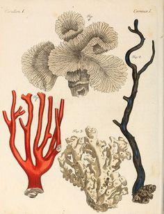 red, white & black coral print