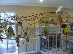birdroom toys | Bird Room Setup: Triton and Goffins Cockatoos