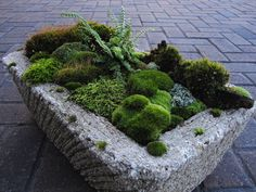 Moss garden in a hypertufa trough