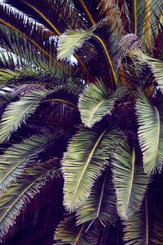 Summer Palms  by  Emily Faulstich