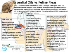Flea Season and Essential Oils   Healthy Families with Only Naturals