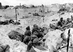 Des prisonniers allemands attendent d'être embarqués pour l'Angleterre dans les dunes de Utah beach, au milieu de leurs propres réseaux de barbelés!