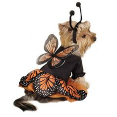 Penny is gonna be a butterfly for Halloween!!! We will have to pass out candy this year haha