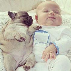 「ああぁ…赤ちゃんと子犬の仲良し『4兄弟』が、もうたまらない」:らばQ
