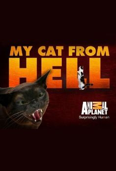 My Cat From Hell Online Episodes Free