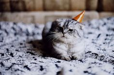 Cat wearing a party hat.