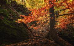 Autumn Impressions III - null