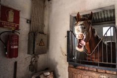 """""""Horse Face"""". I was walking around a farm yard and came across this crazy horse! Location: Avis, Portugal. (Photo and caption by Nick Middleton/National Geographic Traveler Photo Contest)"""