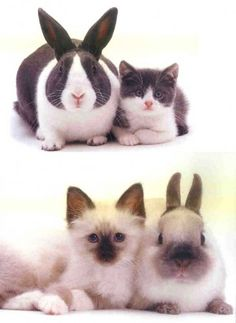 matching kitties and bunnies