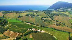 Monte Conero Marche,  vigneto di Rosso Conero....