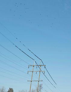 Birds after earthquake