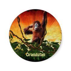 Orangutan Baby and Jungle Sunrise, Great Ape Primate Stickers