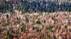 Spectacle of nature in Transyilvania, Romania (aerial view)