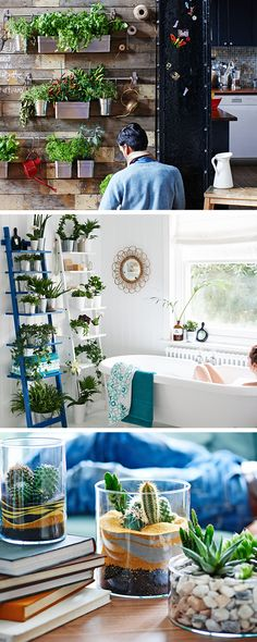 """An indoor garden is a self-contained one – make it as small or large as you want. Adding plants in the bathroom brings an instant sanctuary feel. Ladders don't take up much space, create more impact with two. You might think you have no space for an indoor garden – but all you need is part of a table. Cacti and succulents are easy to look after, so they're great if you don't have much time or are often away. A collection of """"cactus-scapes"""" creates drama, so have fun playing with different…"""