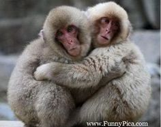 Funny Monkeys - Funny Monkey Picture 150 (FunnyPica.com)