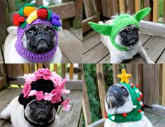 """How to start every day happy... google """"pugs in hats"""""""