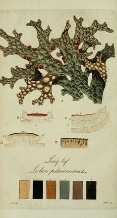 Lichen color charts from the Svensk Lafvarnas Farghistoria by Johan Peter Westring. Printed in 1805-09. Via the Biodiversity Heritage Librar...