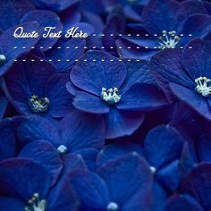 Get your name in beautiful style on Blue Flowers picture. You can write your name on beautiful collection of Quotes pics. Personalize your name in a simple fast way. You will really enjoy it.