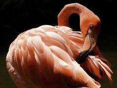 Alubild Anowi Tiere Vögel Fotografie Pink Rosa