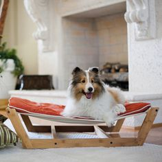 Pet hammock for a super cute sheltie! Puppies And Kitties, Pet Dogs, Pet Pet, First Aid For Dogs, Pet Hammock, Rough Collie, Animal Projects, Sheltie, Diy Stuffed Animals