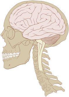 """""""Tak tohle je prostě pecka""""- byla moje první reakce po zaboření nosu do loňské knižní novinky Moučný mozek. Americký neurolog David Perlmutter, který knihu napsal, mi dokonale potvrzuje informace, které jsem za poslední roky sesumírovala, a přidává pěknou porci novinek navíc. Nově a neotřele se dívá především na naše mentální zdraví - ukazuje vliv stravy…"""