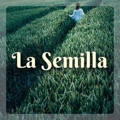 """Esta semana hablamos de """"La Semilla"""" http://www.connectwithyourmisma.com/la-semilla/ #connectwithyourmisma #blog #lasemilla"""