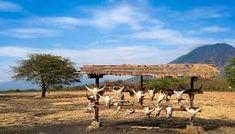 Paket Wisata Banyuwangi 3 Hari 2 Malam Valuable Tour - A - paket wisata banyuwangi, paket tour banyuwangi Backpacker, My Dream, Underwater, Camel, Road Trip, National Parks, Bali, Survival, Tours