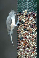 Top Ten Bird Feeding Tips ----- including Keep Birds Safe - Avoid Window Collissions Bird Suet, Bird Feeder, Love Birds, Beautiful Birds, Nester, How To Attract Birds, Bird Food, Backyard Birds, Plantation