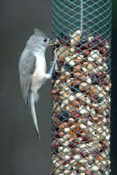 Top Ten Bird Feeding Tips