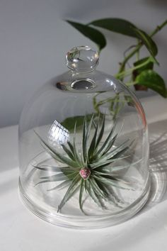 I like it!! dome terrarium by sweetandshiny on Etsy, $20.00