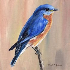 "Daily Paintworks - ""Eastern Bluebird"" - Original Fine Art for Sale - © Janet Graham"