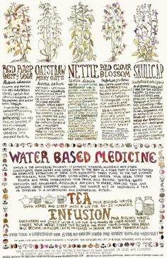 Old version of Menstrual Herbs poster - Water Based Medicine Poster, Herbs for Folks who Menstruate - Natural Cough Remedies, Cold Home Remedies, Natural Health Remedies, Natural Cures, Natural Healing, Herbal Remedies, Natural Foods, Holistic Healing, Natural Oil