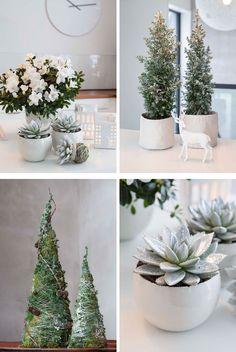 Kjegler av mose, vintergrønt med snø og lyse blomster inspirert av vinter og frost
