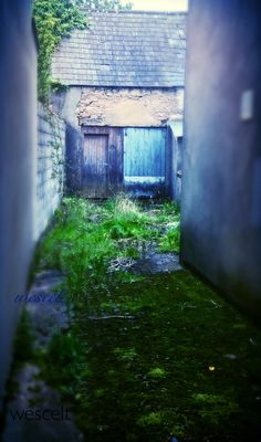 Mossy alley leads to old building in Tulla, Irish Girls, Old Building, Celtic, Ireland, Landscapes, Green, Nature, Travel, Paisajes