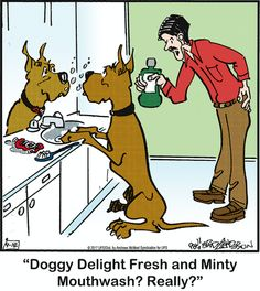 It's Funny, Funny Sayings, Funny Dogs, Funny Stuff, Animal Pics, Animal Quotes, Funny Animal Pictures, Dog Cartoons, Cartoon Dog