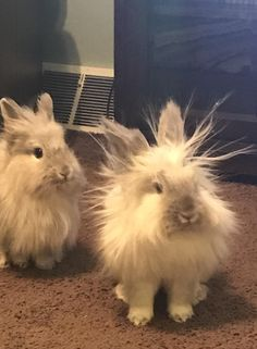 Bunny holding a charge http://ift.tt/2mC1nEv