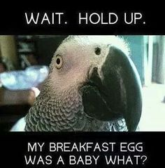 Hahahahahahha. That's right you little baby bird eating abomination lol. But I still love my boy.