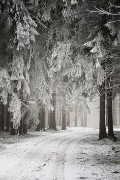snowy road  via sue Costagioliola