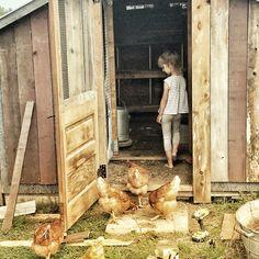 Chicken coop revamp! #chickencoop #kids #boardandbatten #wood #old #rustic A Perfect Day, Raising Chickens, Hens, My Photos, Nutrition, Indoor, Rustic, Rose, Interior