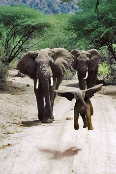 Flying baby elephant