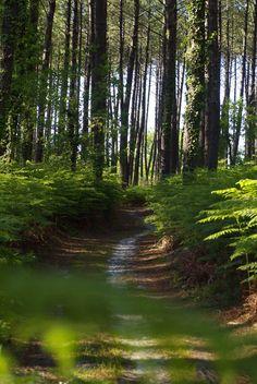 Sentier dans la forêt - #Mimizan
