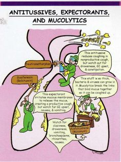 Nursing Pharmacology: Antitusssives, Expectorants and Mucolytics Pharmacology Mnemonics, Pharmacology Nursing, Nursing Tips, Nursing Programs, Nursing Scrubs, Med Surg Nursing, Ob Nursing, Funny Nursing, Family Nurse Practitioner
