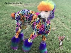 Dog Grooming, Dogs, Animals, Color, Animales, Animaux, Pet Dogs, Colour, Doggies