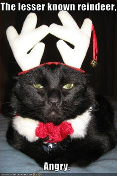 For more Christmas cats, visit http://Facebook.com/funholidaycats