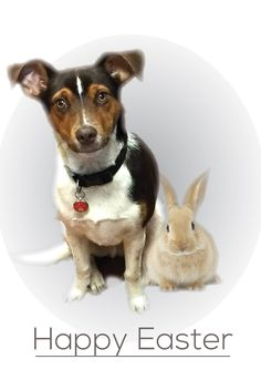 Happy Easter from Kennys Bindery. Happy Easter, Charity, Corgi, Adoption, Animals, Happy Easter Day, Foster Care Adoption, Animaux, Corgis
