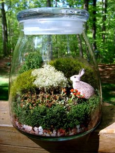 Cute terrarium with a bunny!!! Bebe'!!! Sweet terrarium!!!