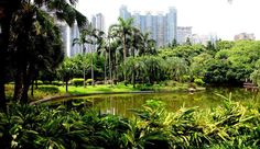 #Zhujiang #Park, a green wetland hiding in the urban center of Guangzhou. As one of the most famous green cities in China, Guangzhou has already reaches the top of model city for environmental protection.