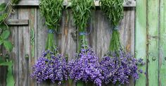 Natural uses for lavendar around the home