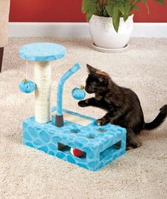 Cat Play Gym Pet Toys Animal Home Steps Supplies Accessories Blue - http://www.petsupplyliquidators.com/cat-play-gym-pet-toys-animal-home-steps-supplies-accessories-blue/